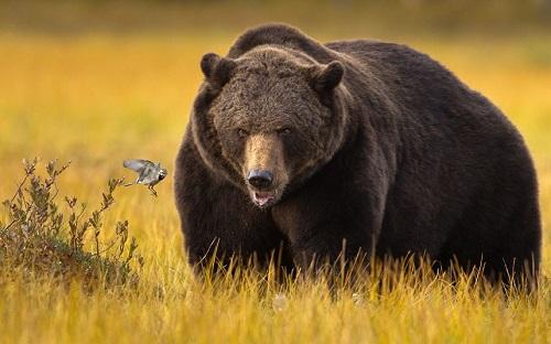 ВАлтайском крае начинается сезон весенней охоты