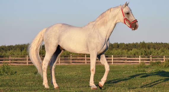 ВБразилии лошадь лягнула автомобиль исела втюрьму