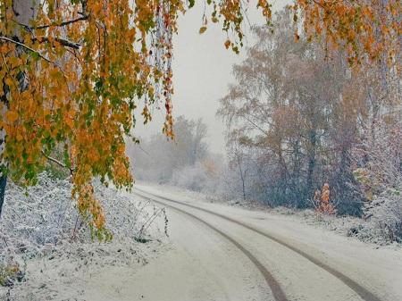 Картинки по запросу фото ноябрь