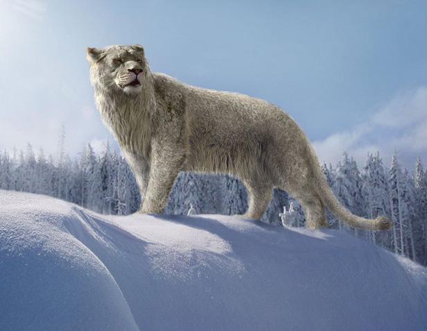 Останки двух древних львят, найденных в Якутии, переданы ученым