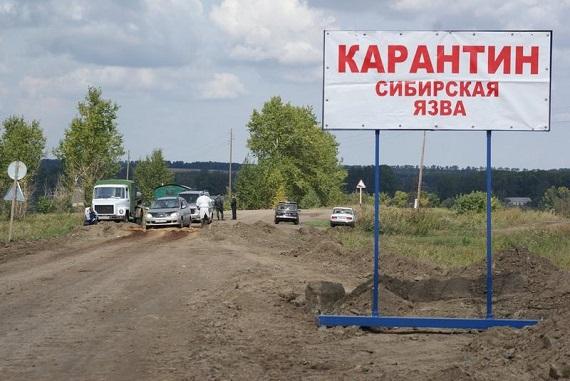 Сибирскую язву подозревают у граждан Тувы