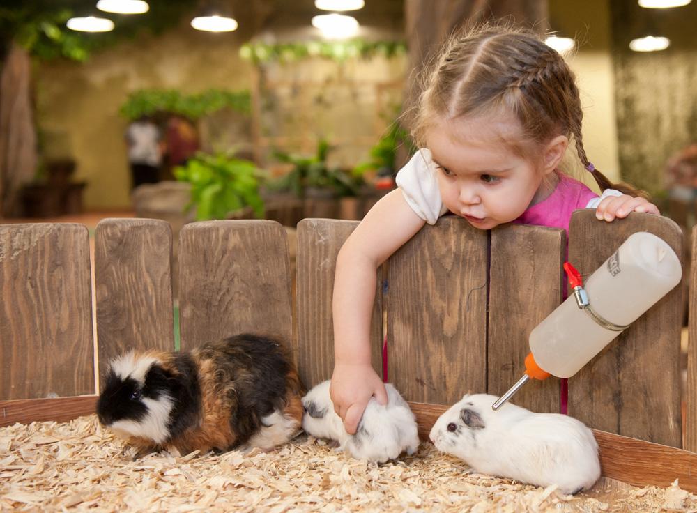 Картинки кормить домашних животных
