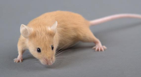 Мыши съели млн. вбанкомате Индии