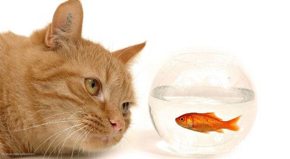 Черный котенок с золотой рыбкой  № 2955010 без смс