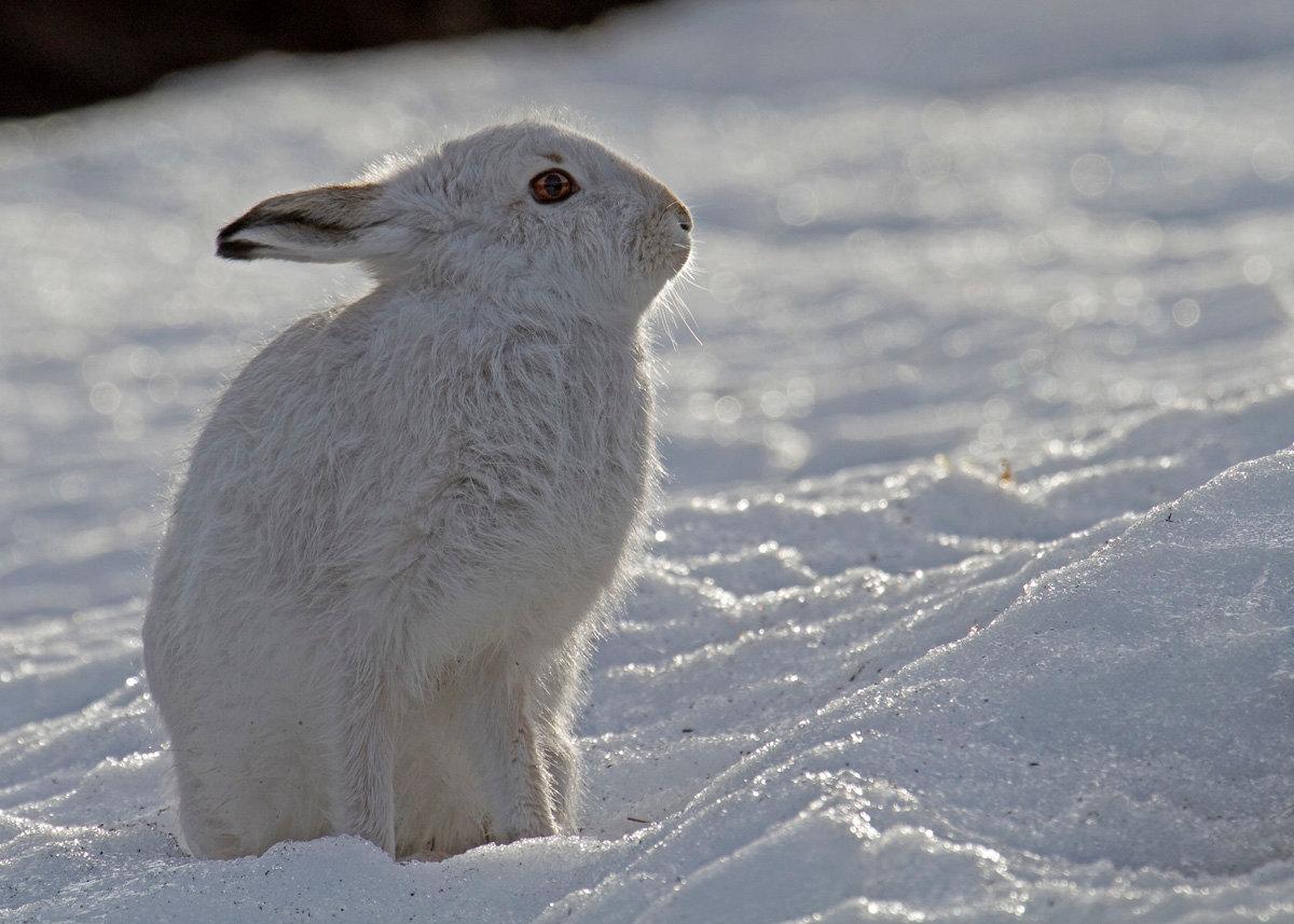 самом фотография белого зайца сквере гармонистов