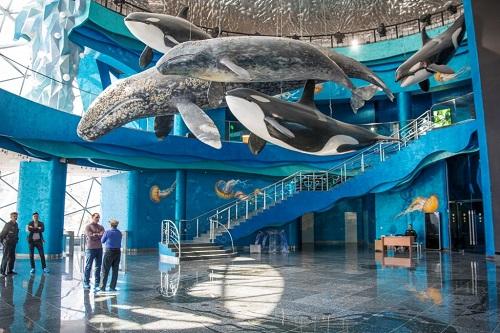 9 Смерть дельфина стала первопричиной ухода директора Приморского океанариума