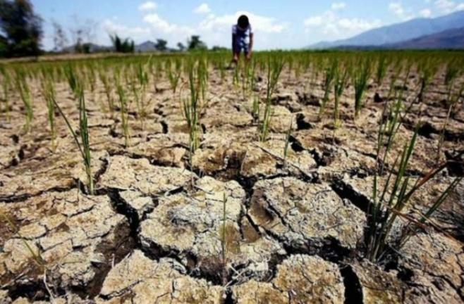 Стоимость гектара земли на кипре сельское хозяйство